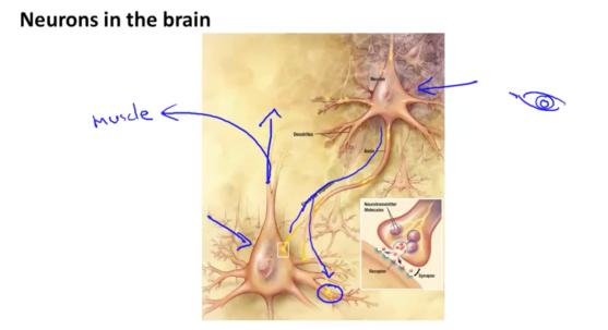 neuron02